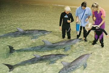 Moreton Island Overnight Stay at Tangalooma Resort from Brisbane