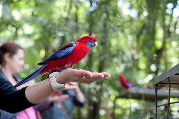 Springbrook Nationalpark: Ganztägige Buschwanderung