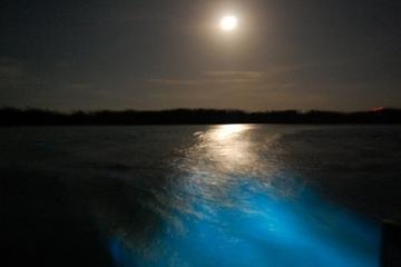 Bootstour bei Nacht zur Luminous Lagoon in Jamaika