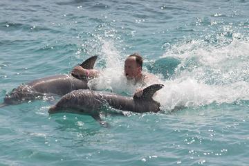 Ocho Rios combinatietour: Dolphin Cove en cruise bij zonsondergang ...