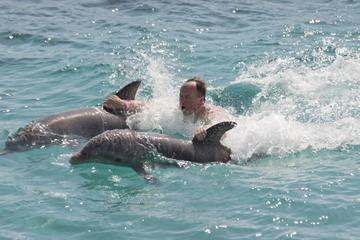 Combo Tour: Dolphin Cove and Sunset Cruise