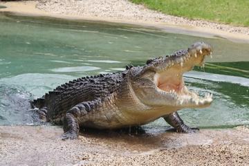 Recorrido por Jamaica Swamp Safari Village y Falmouth desde Montego...