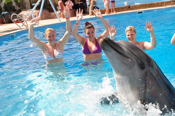 30 Minute Swim with Dolphins in Sharm el Sheikh