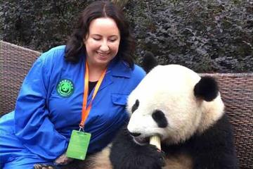 Panda Holding Tour at Dujiangyan Panda Base