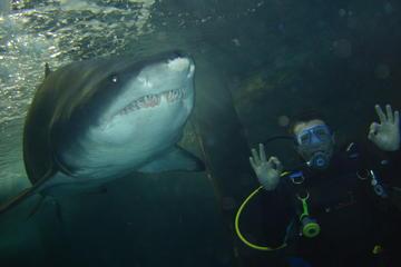 シドニーでシャーク ダイビング エクストリーム…
