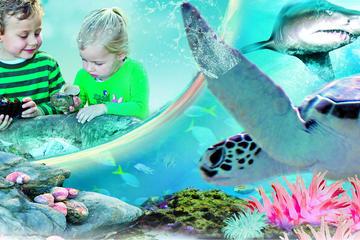シドニーアトラクションパス:シーライフ水族館、…