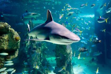 Fai snorkeling con gli squali al SEA LIFE Aquarium di Sydney