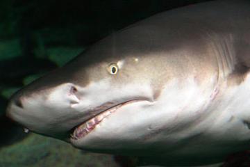 SEA LIFE Sydney Aquarium VIP-tour 'Achter de schermen'