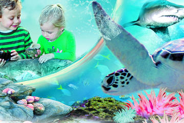 Sydney Attractions-pass: SEA LIFE Aquarium, Sydney Tower Eye, WILD ...