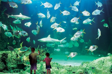 Sydney Pass: SEA LIFE Aquarium, Tower Eye de Sídney, WILD LIFE...