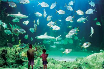Sydney Pass: SEA LIFE Aquarium, Tower Eye di Sydney, Wild LIFE
