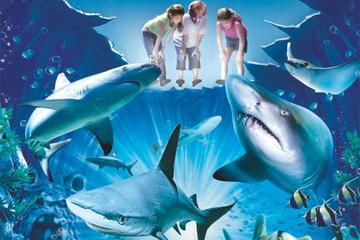 billet-coupe-file-pour-l-aquarium-sea-life-de-sydney