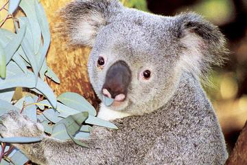 パース動物園の一般入場券と観光クルーズ