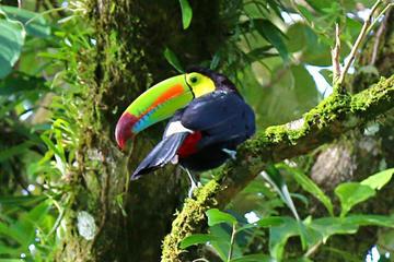 Birdwatching Tour at Mistico Arenal Hanging Bridges Park