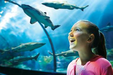 Kaartje voor SeaWorld®