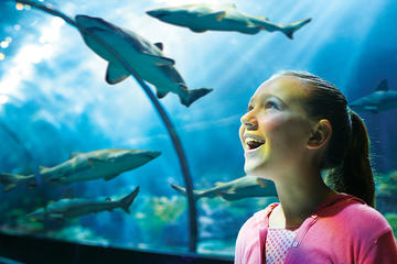 SeaWorld® Orlando-biljett