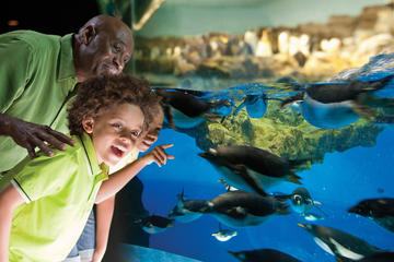 SeaWorld® San Antonio