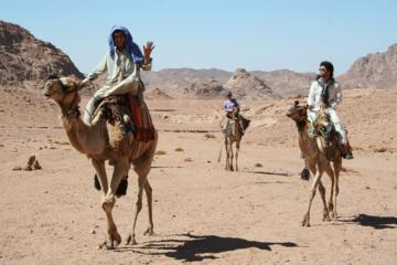 Camel Riding Adventure from Sharm El Sheikh