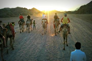 Small Group Desert Safari from Sharm el Sheikh: Camel Riding...
