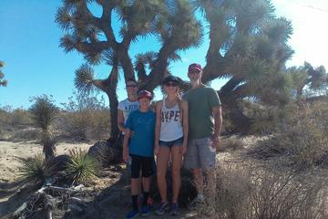 Day Trip Joshua Tree National Park Van Tour near Palm Springs, California
