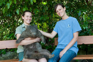 Zootastic Experience at Hartley's Crocodile Adventure from Cairns or...