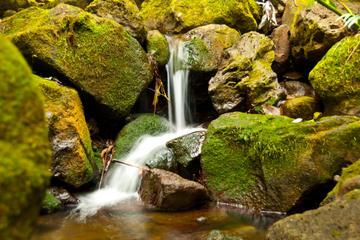 Aventura en la catarata de Manoa para...