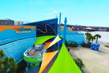 Ripley's Aquarium Myrtle Beach Admission