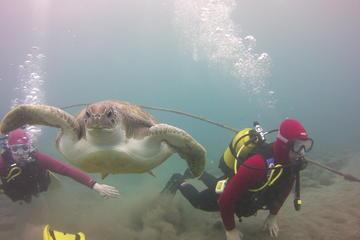 Scuba Diving Beginner's Session in...