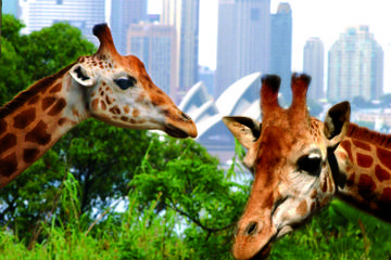 Sydney Harbour Hop-On Hop-Off Boat 3-Day Pass with Taronga Zoo