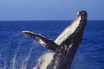 Sydney Bootsfahrt mit Walbeobachtung