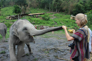 Full Day Visit to Elephant Jungle Sanctuary in Chiang Mai