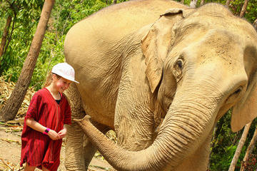Half-Day Afternoon Visit to Elephant Jungle Sanctuary in Chiang Mai