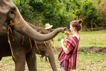 Half-Day Morning Visit to Elephant Jungle Sanctuary in Chiang Mai