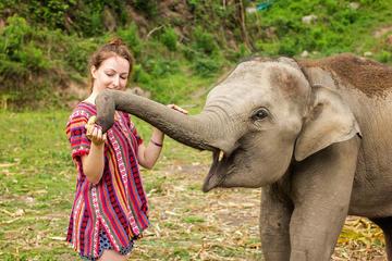 Half-Day Morning Visit to Elephant Jungle Sanctuary in Phuket