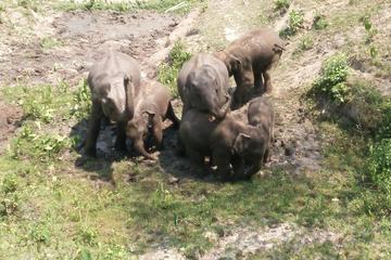 Visita de dia inteiro para o Elephant Jungle Sanctuary em Chiang Mai