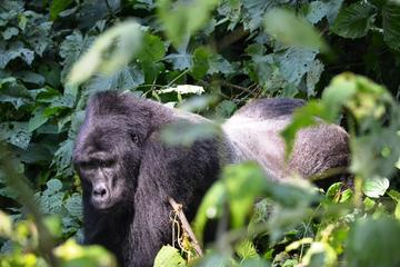 5 Days Gorillas and Wildlife Safari