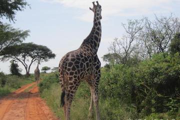 Lake Mburo National Park Safari Day