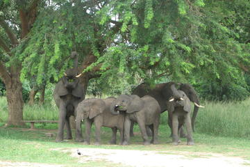 The 3 day Murchison Falls National...