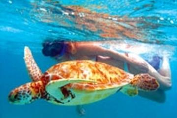Aventura de tortugas marinas y buceo de superficie en la bahía Akumal...