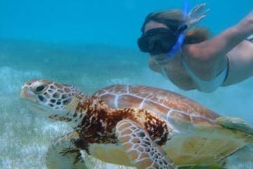 Excursión en tierra en Cozumel: aventura de tortugas marinas y buceo...