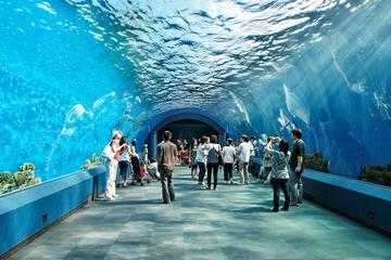 Pattaya Underwater World Admission with Hotel Transfers