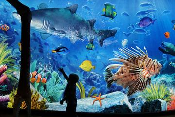 Sea Life Ocean World - Admission Only