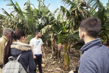 Excursion d'une journée à la ferme de bananes avec déjeuner