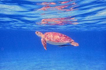 Carta Privada de Snorkeling de Meio...