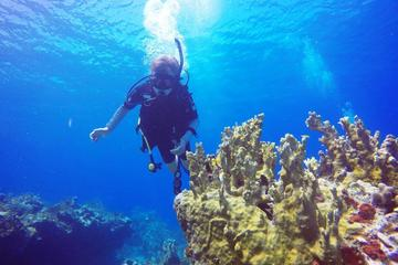 Private Half-Day Dive Charter