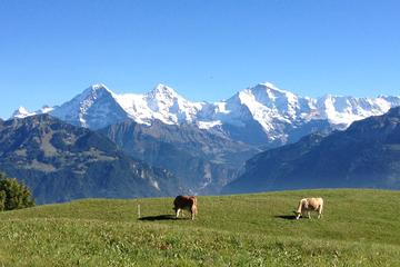 VIP Interlaken Sightseeing Tour with Personal guide