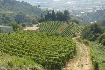 Provence Full-Day Private Tour from...