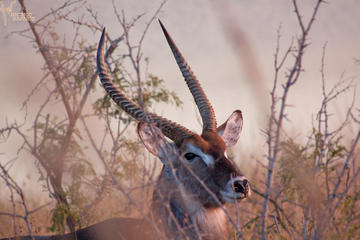 2-Day Bushveld Safari Guided Tour...