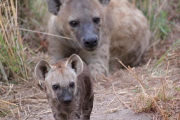 2-Day Kruger Safari from Johannesburg or Pretoria