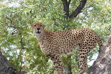 3-Day Kruger Park Safari from Johannesburg or Pretoria
